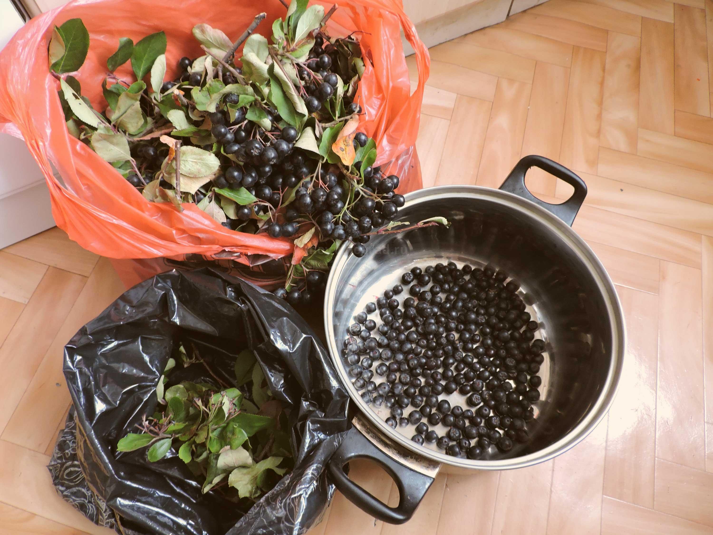 приготовление вина из черноплодки в домашних условиях фото