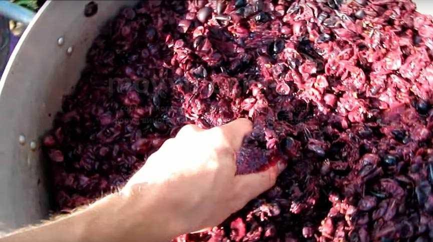 Чача из винограда брага фото