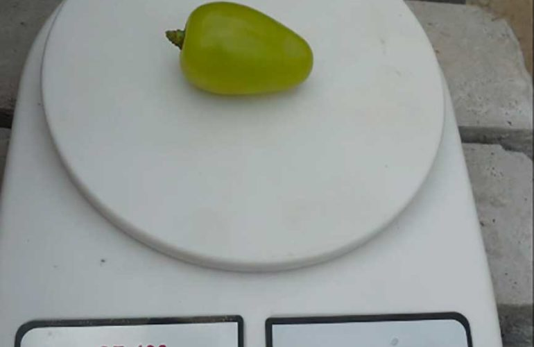 виноград-Бажена-вес-ягоды-фото