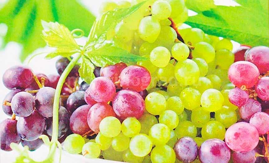 виноград-и-беременность-фото
