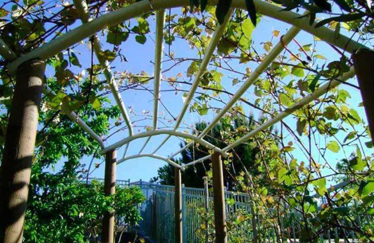 Декоративные шпалеры для винограда фото