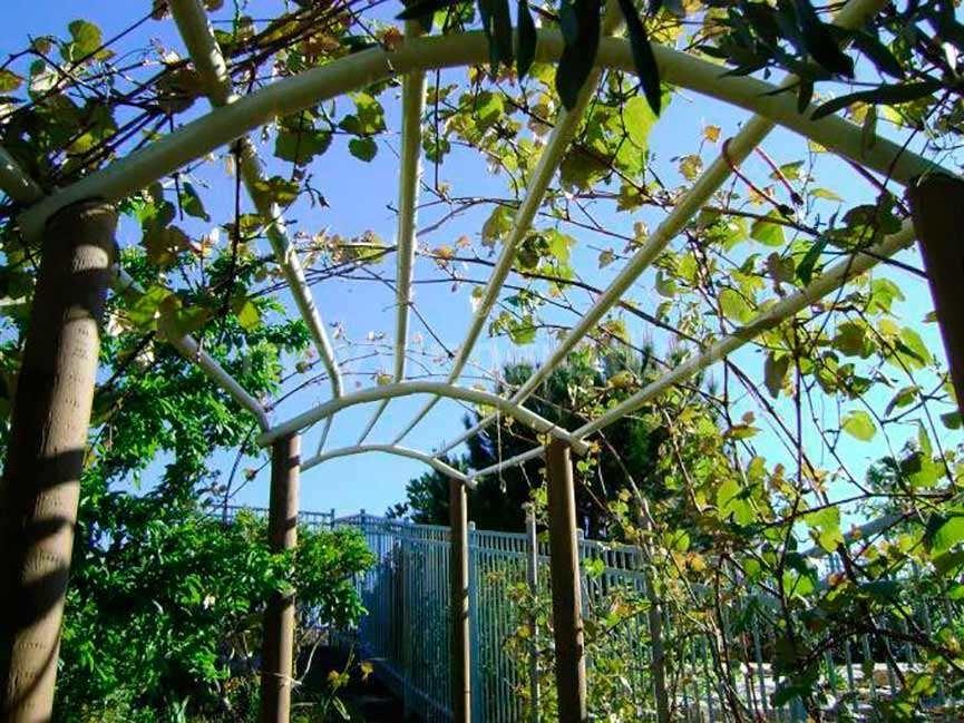 Шпалера для винограда арочная