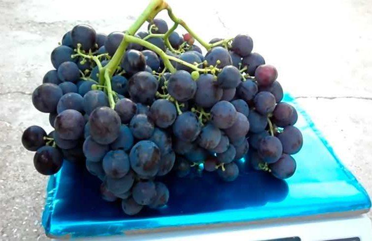 Рошфор виноград на весах фото