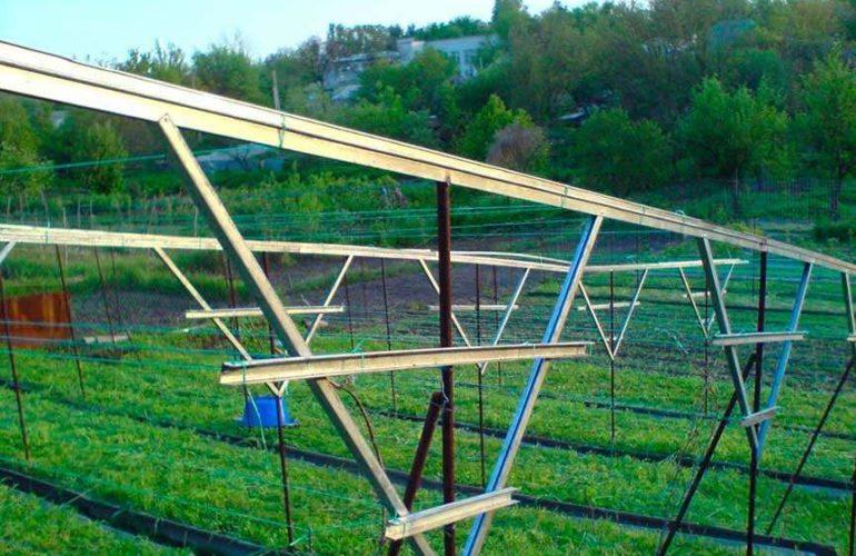Шпалеры для винограда V-образная пример фото