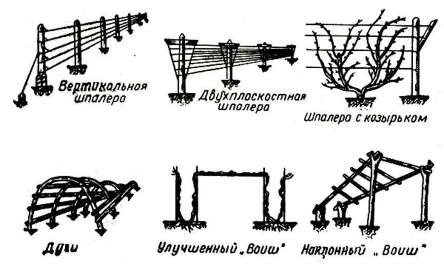 схемы разных видов шпалер для винограда фото