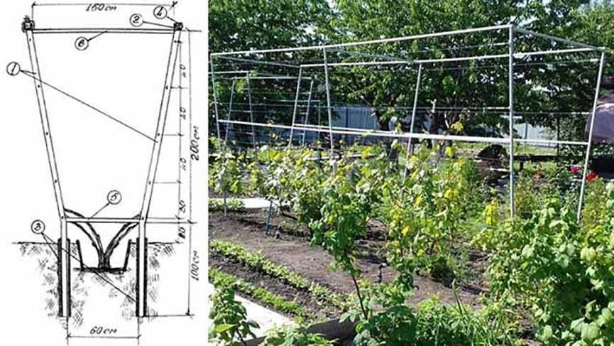 шпалера для винограда со схемой фото