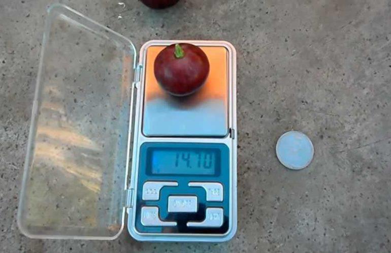 Ягода винограда Рошфор на весах фото