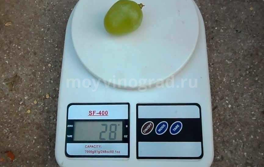 Ягода винограда Монарх фото