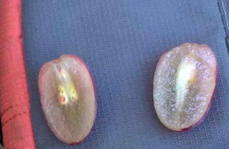 Плотность ягод сорта Ризамат фото