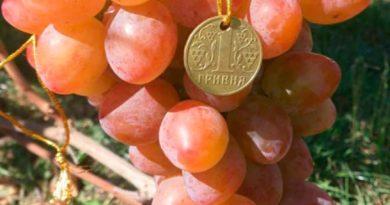Виноград Алладин фото