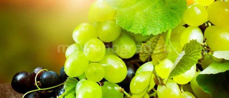 Калорийность-винограда-фото