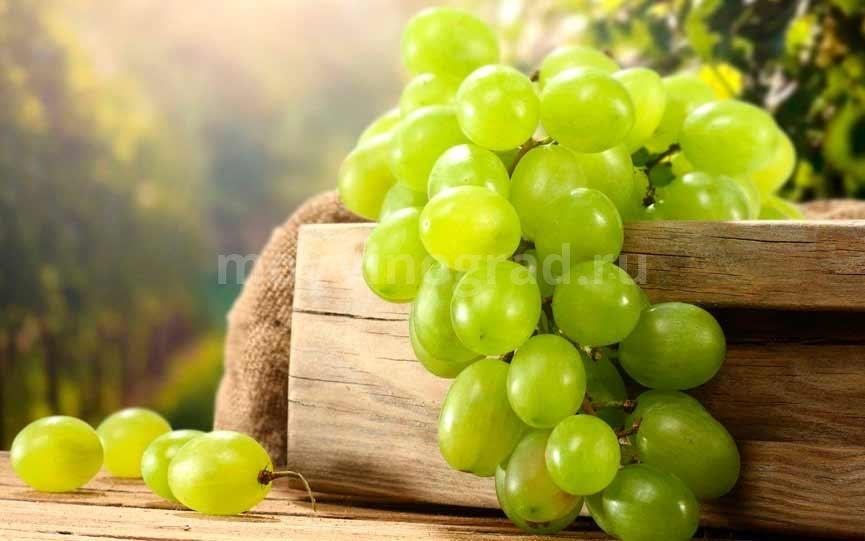 Калорийность-зеленого-винограда-фото
