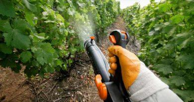 Обработка-винограда-весной-фото