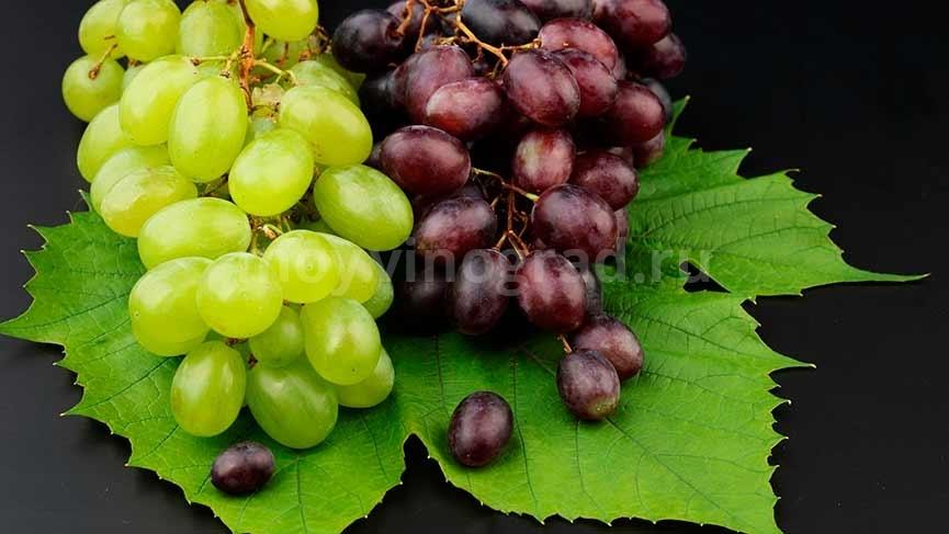 Сколько-калорий-в-винограде-фото