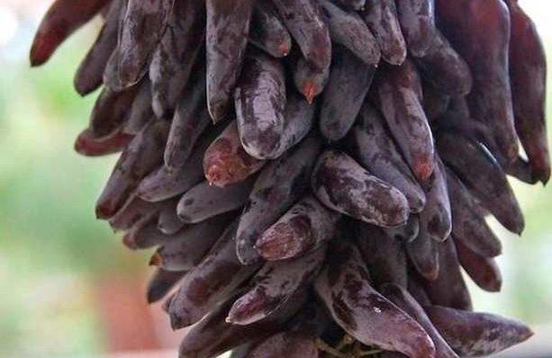Сорт-винограда-ведьмины-пальцы-фото