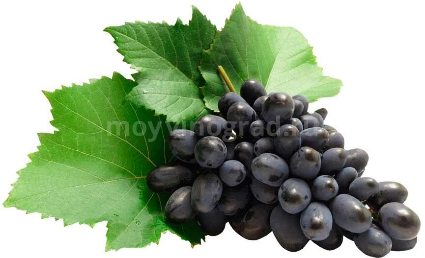 калорийность-черных-сортов-винограда-фото