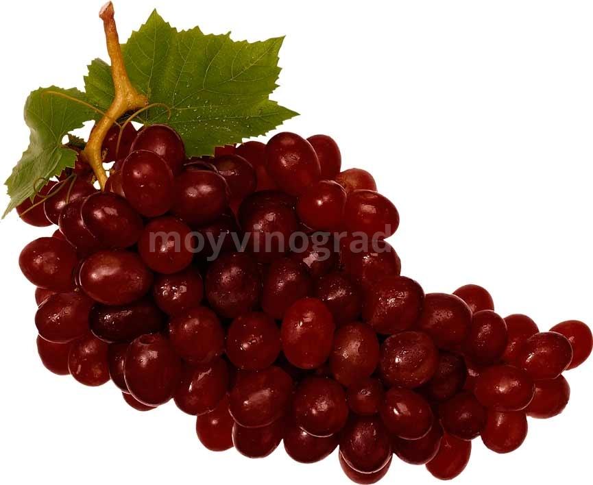 красные-сорта-винограда-фото
