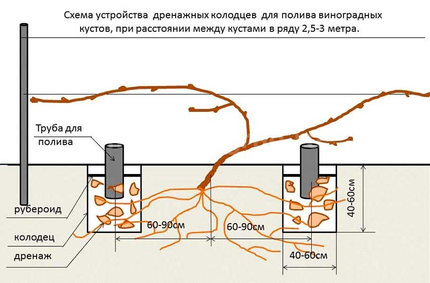 Схема-дренажного-полива-винограда-фото