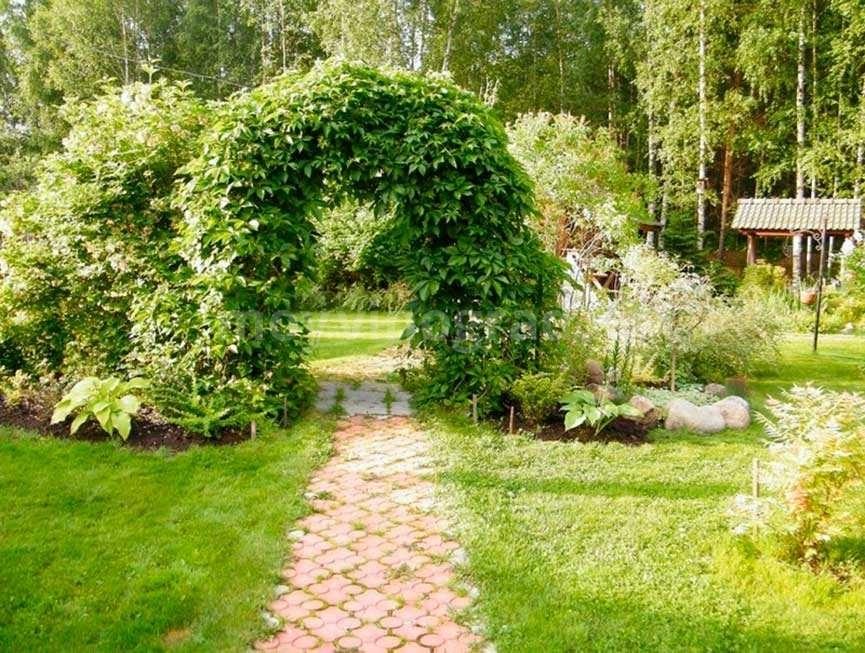 дикий-виноград-в-ландшафтном-дизайне-фото