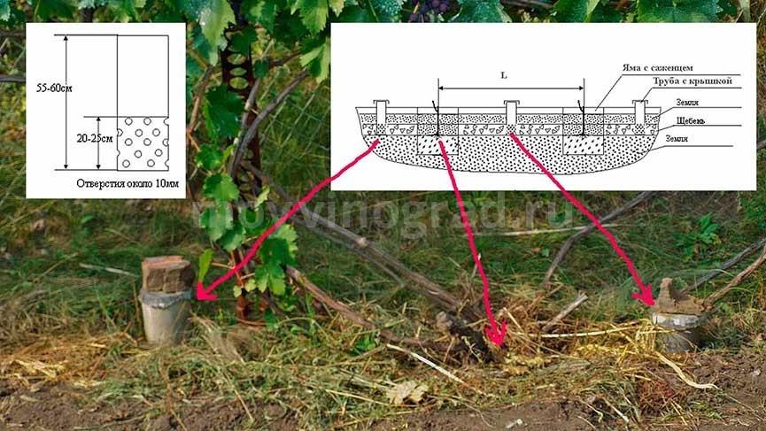 полив-винограда-через-отверстия-фото