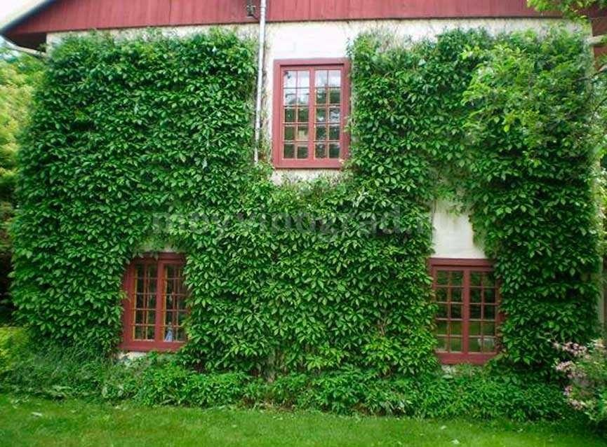 вертикальное-озеленение-фото