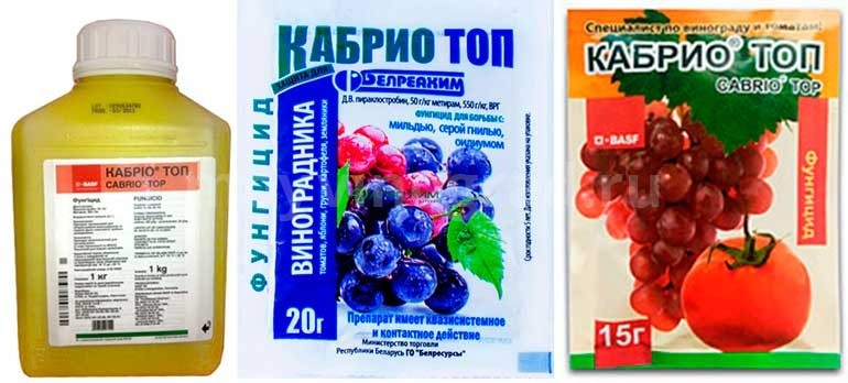 Фунгицид-кабрио-топ-для-винограда-фото