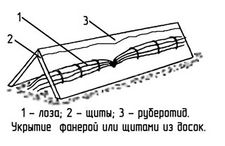 схема-укрытия-винограда-фанерой-и-щитами-из-досок-картинка