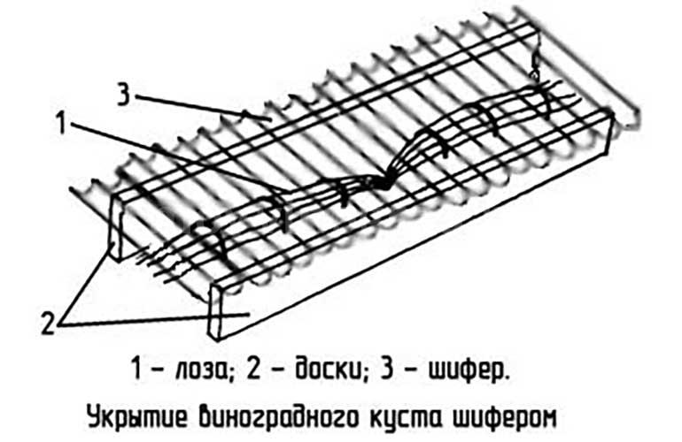 схема-укрытия-винограда-шифером-картинка
