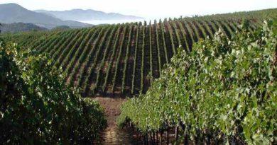 Идеальная почва для винограда