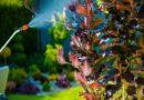 Медный купорос — экономичное средство в борьбе с болезнями