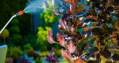Опрыскивание винограда медным купоросом