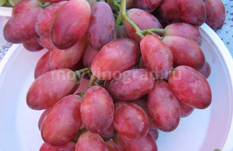 виноград-ася-фото