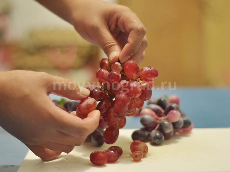 Отделение ягод винограда от веток